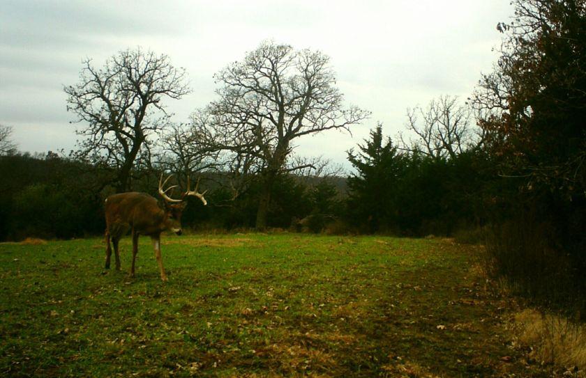 managing buck movements