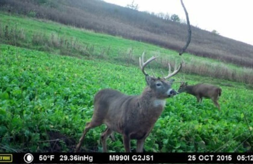 mature buck rut sit alert
