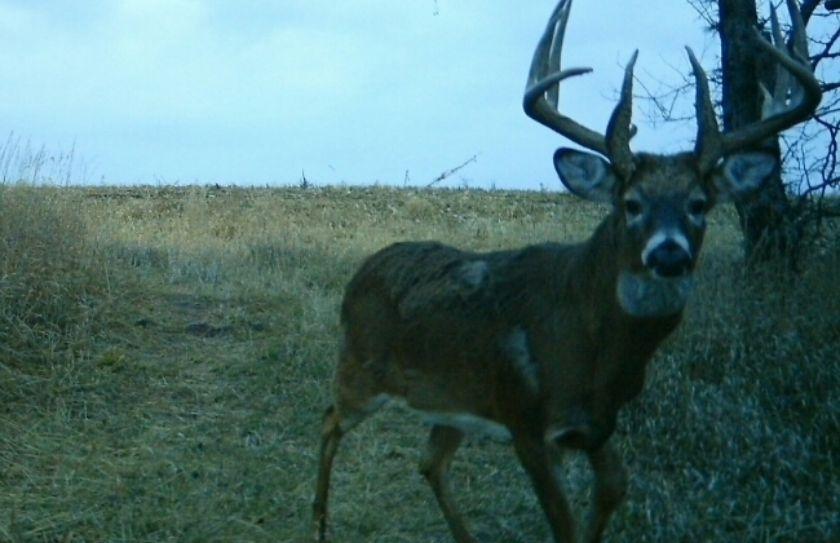 deer staging