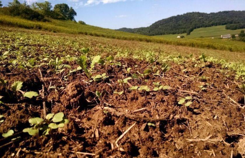 recover from food plot failures