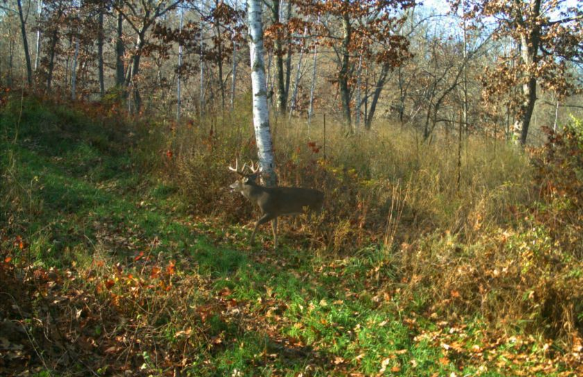 deer bedding location