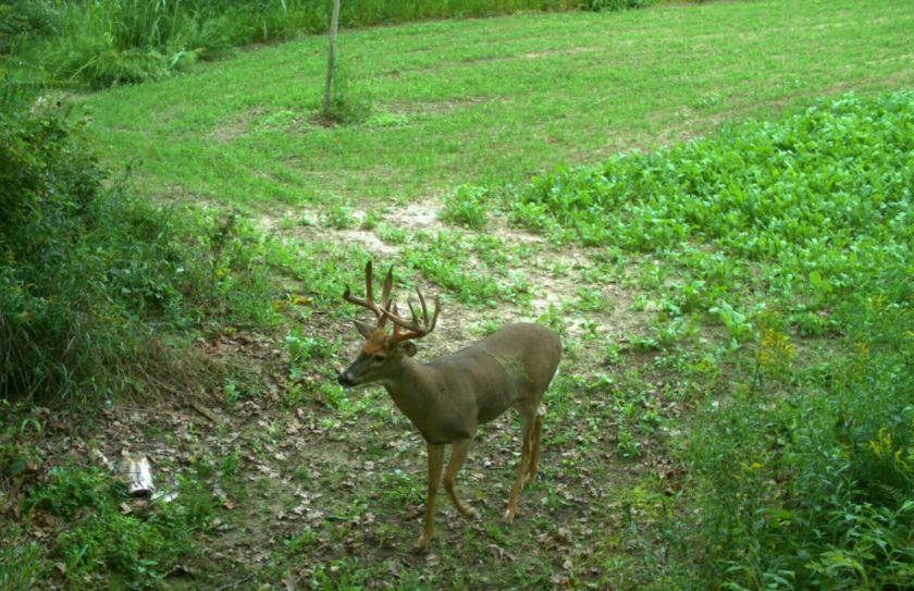 deer planting tip