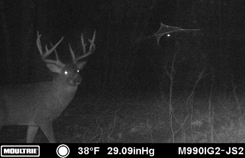 trail cam scouting