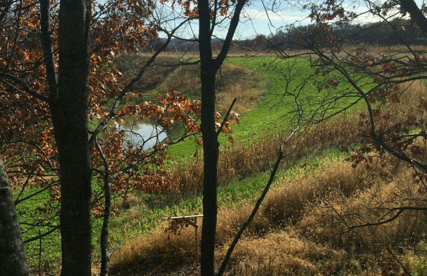 bowhunting habitat strategy