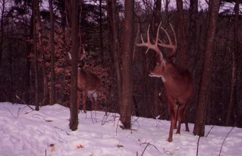 late season deer