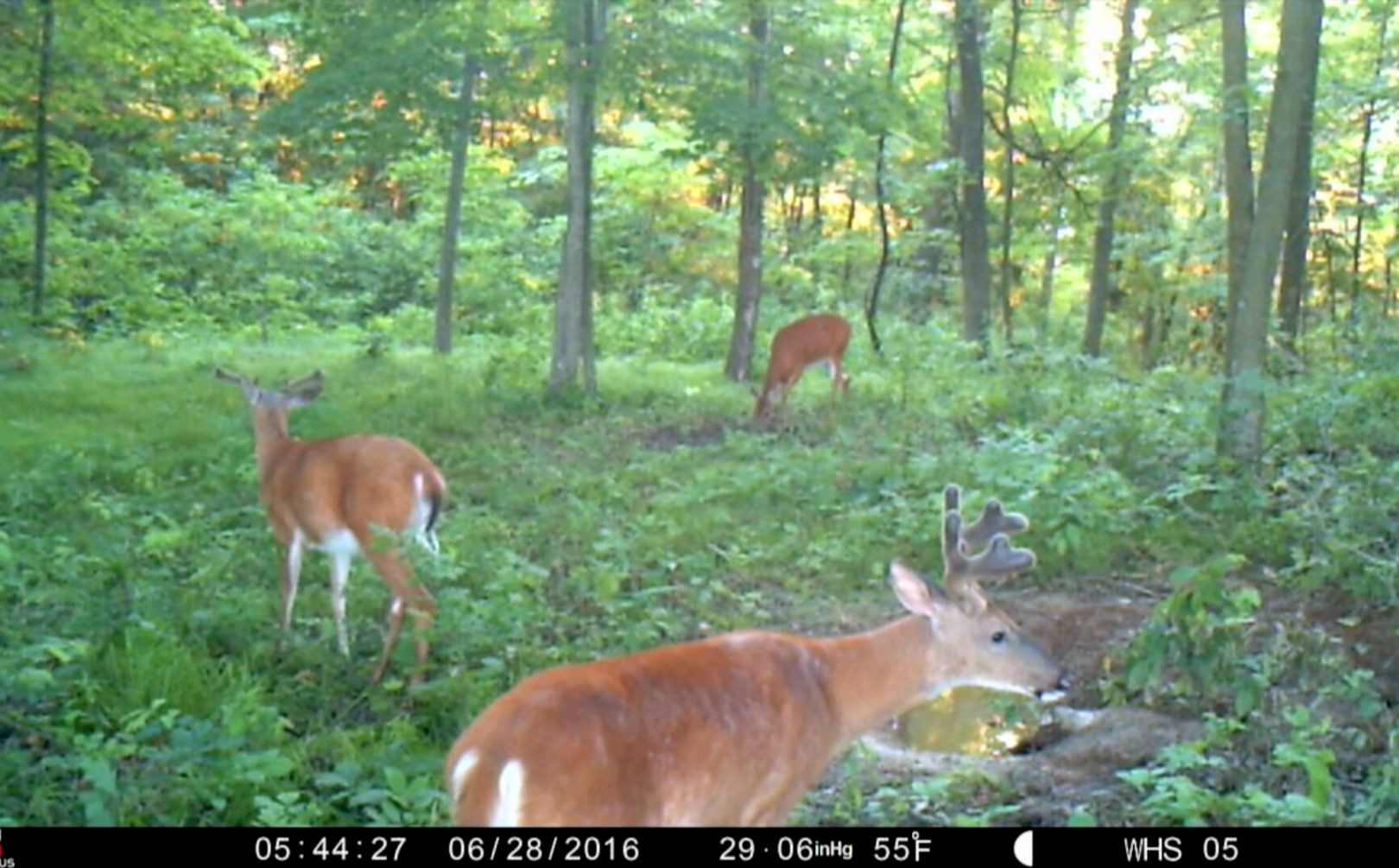 Spook proof trail cam