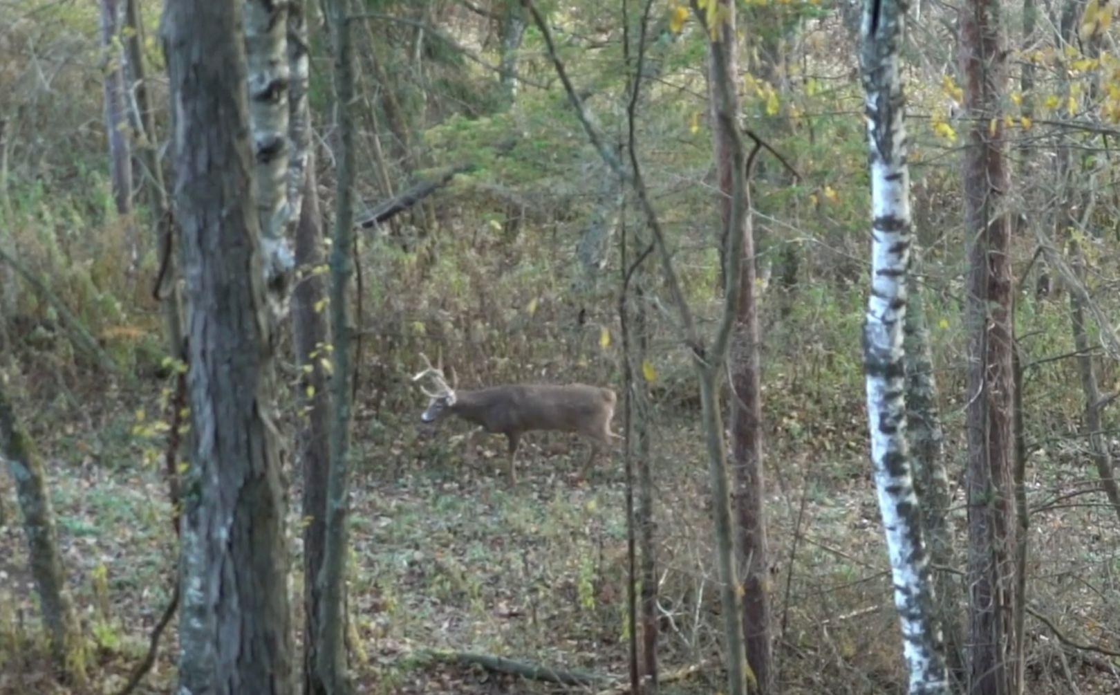 Deer Travel Corridor