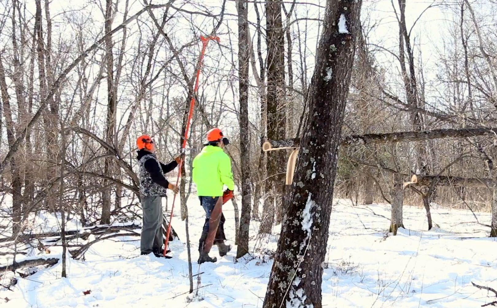 Hinge Cut Deer Habitat