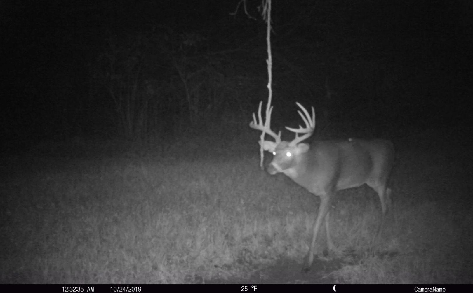Nocturnal Deer Parcel