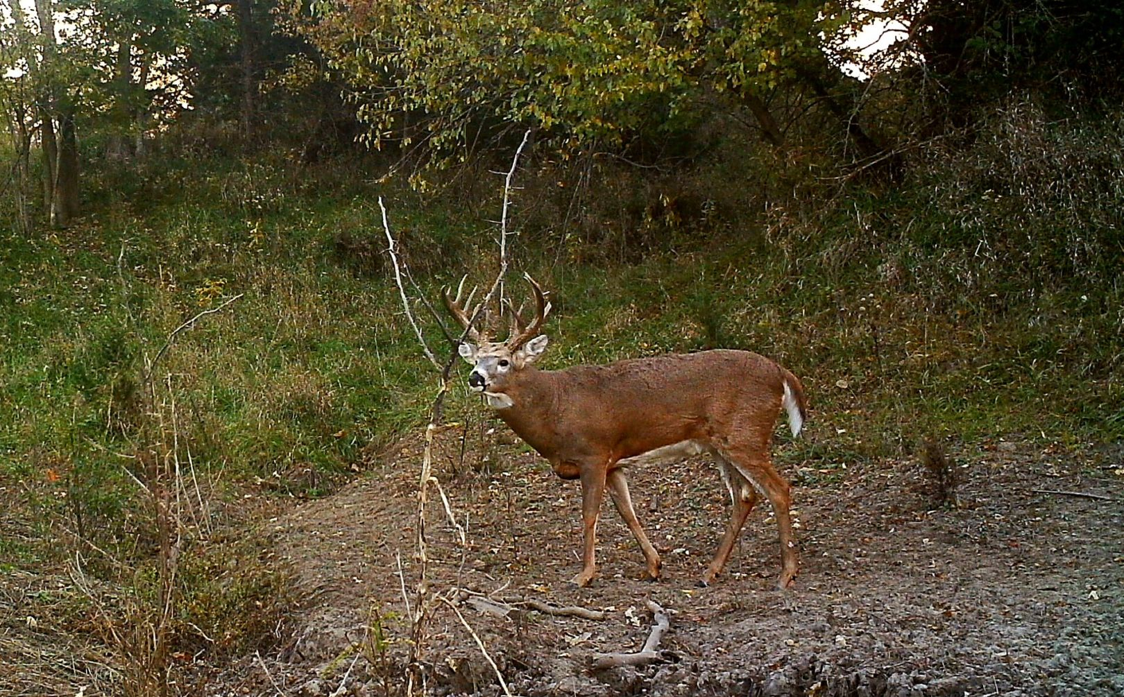 Treestand exit strategy