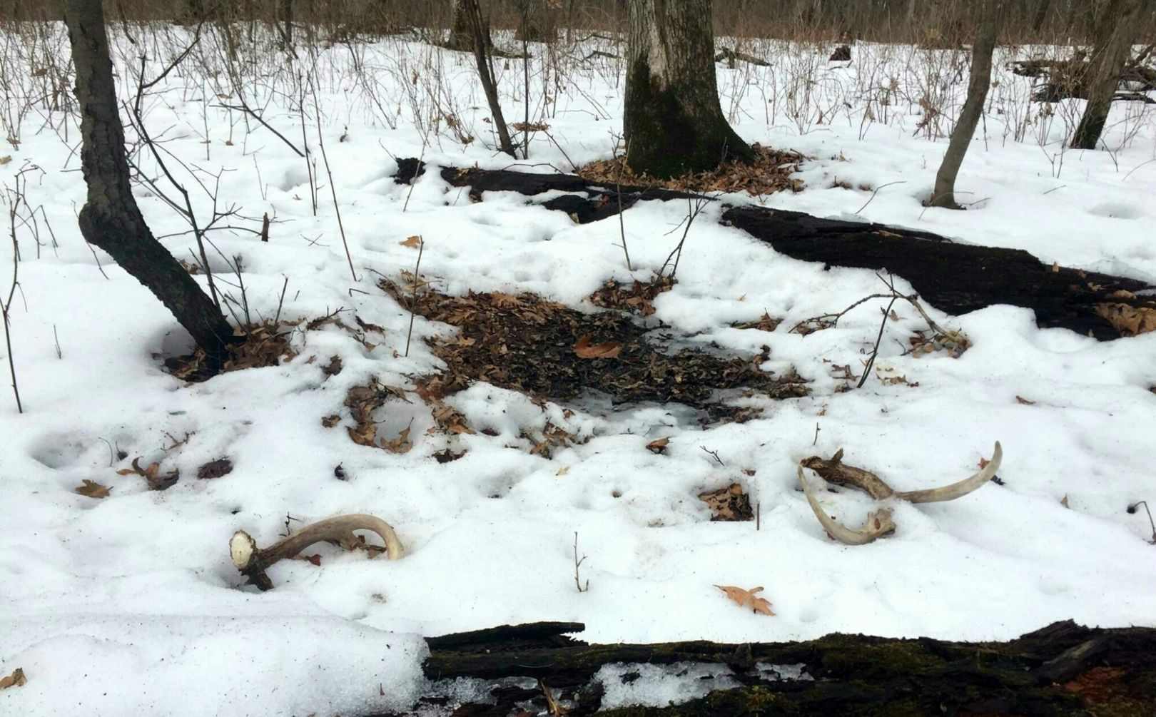 Winter whitetail scouting