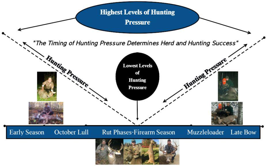 deer hunting pressure