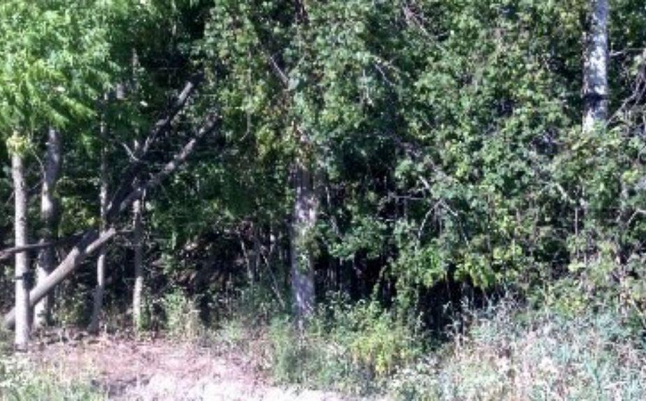 deer cam location