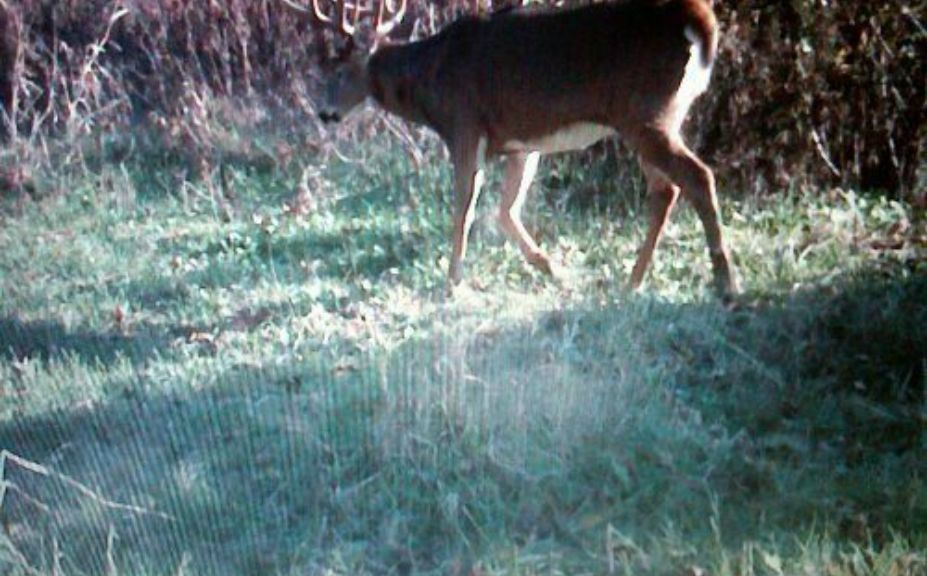 mature buck habitat hunting strategies