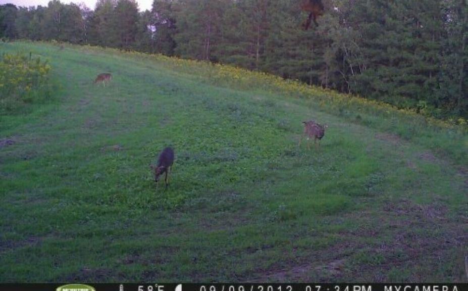 hide trail cams