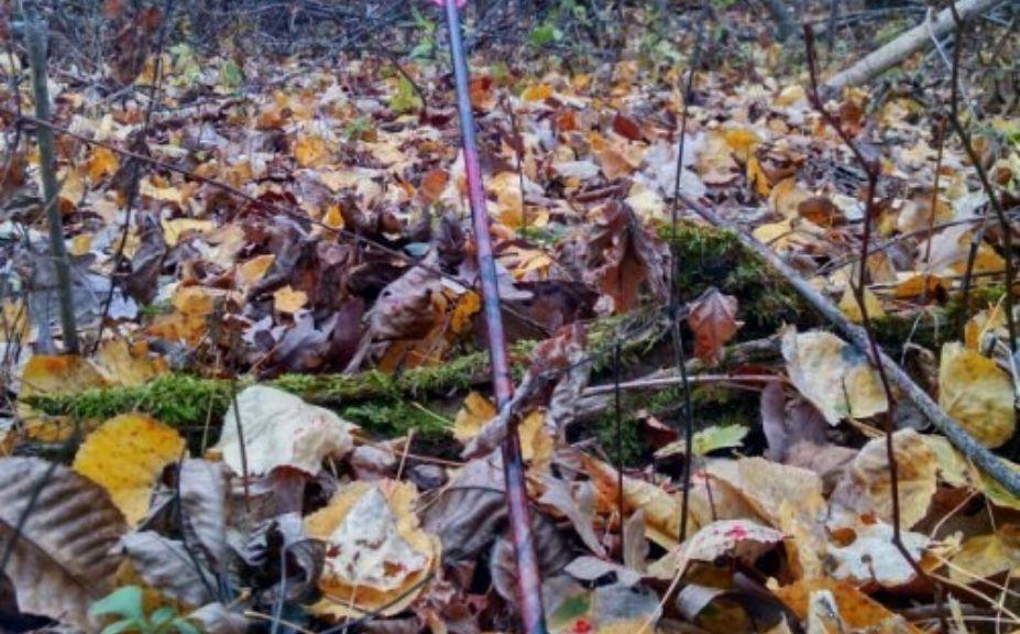 bow season bucks rain