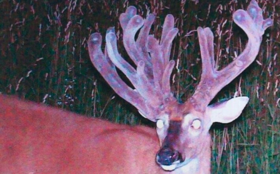 cold weather buck