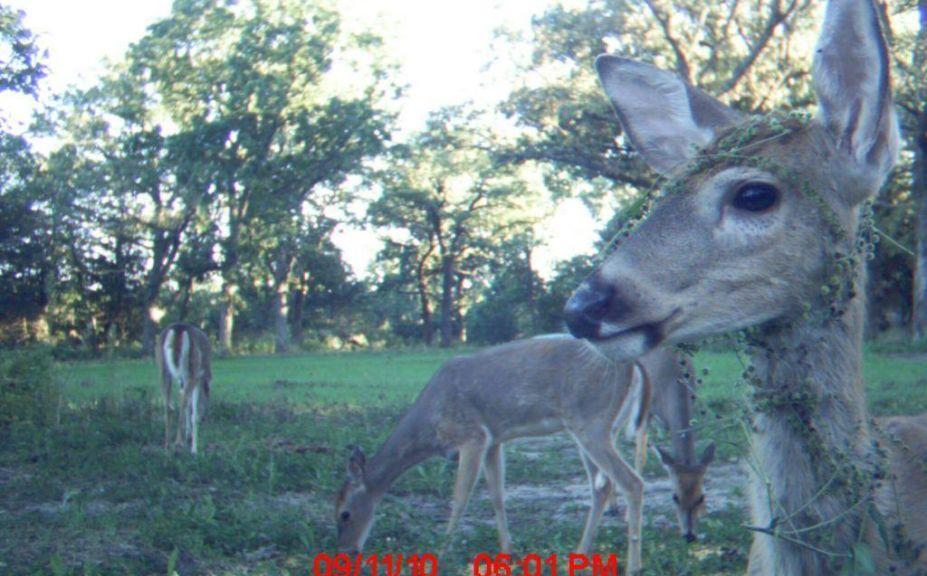 deer movement patterns