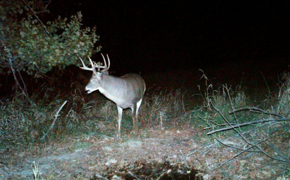 methods to age a buck