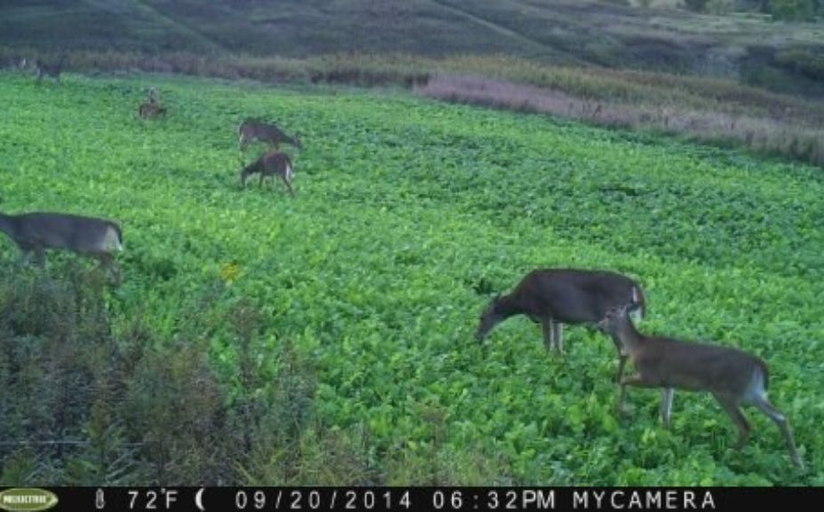 whitetail habitat management myths