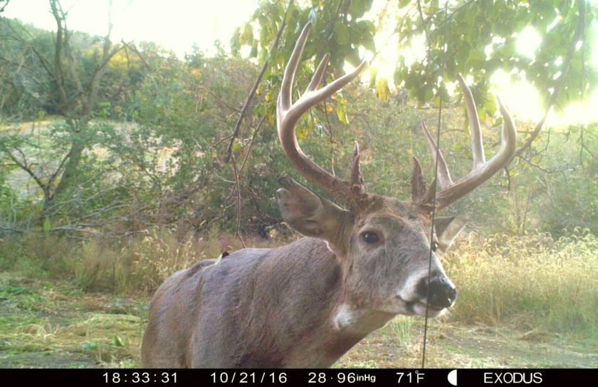 evening buck hunting strategy
