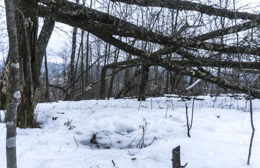 deer bedding canopy