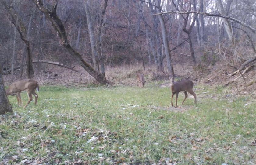Deer Social Distancing
