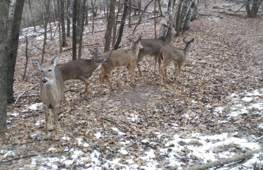 Doe Hunting Strategy