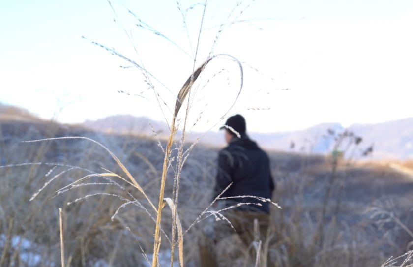 Frost Seed Switchgrass