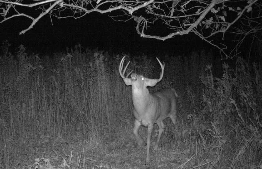 low impact trail cam