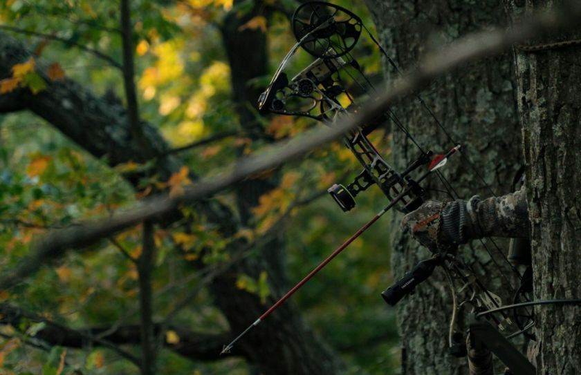 in one treestand
