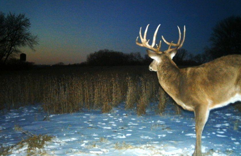 december buck hunting