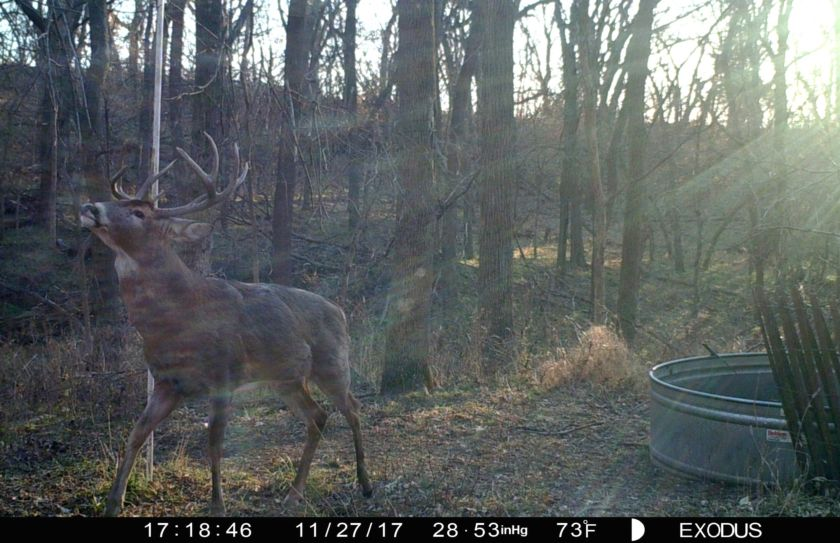 fool a whitetails nose