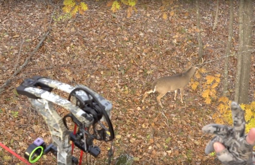 Treestand Bowhunting