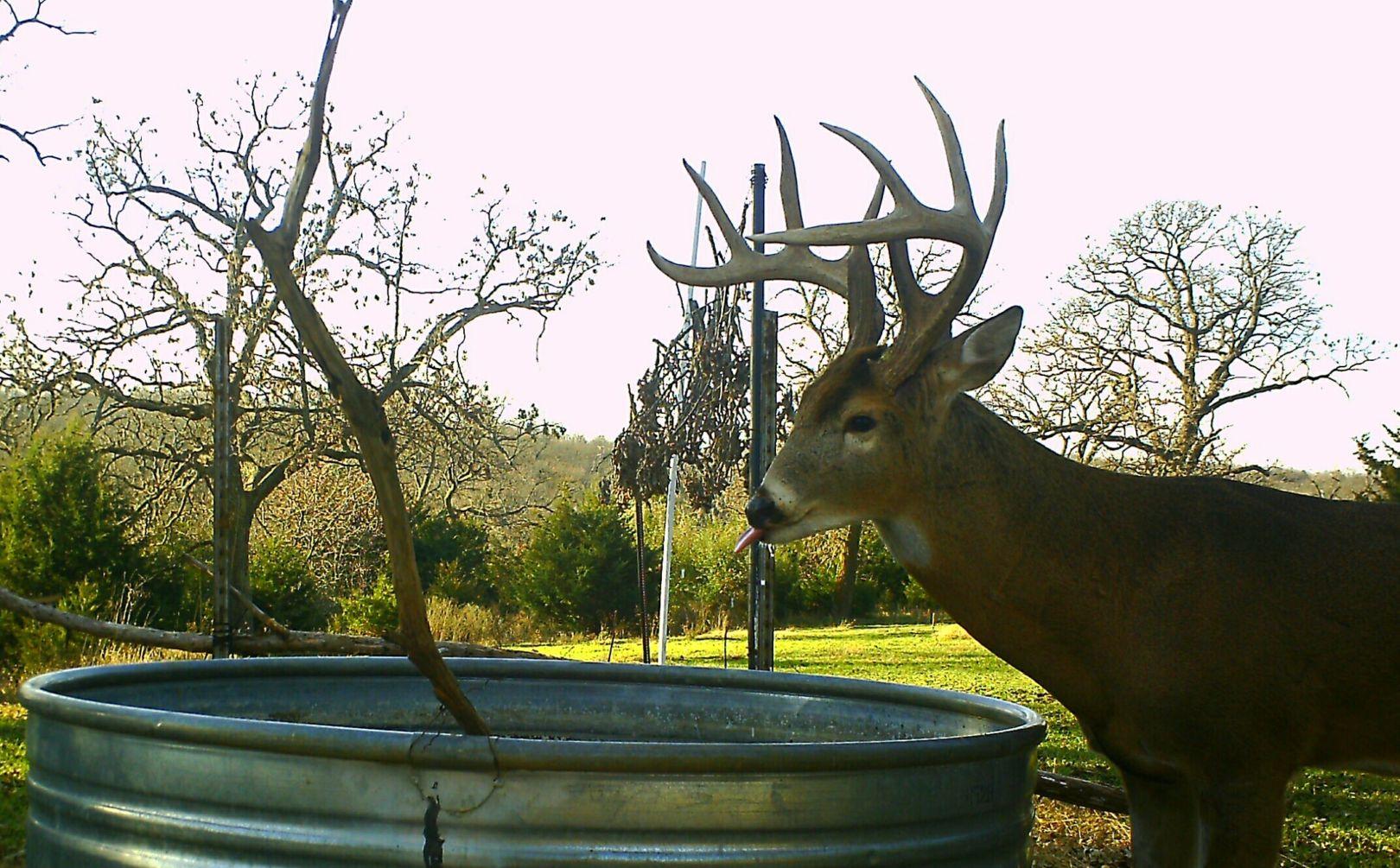 waterhole for deer