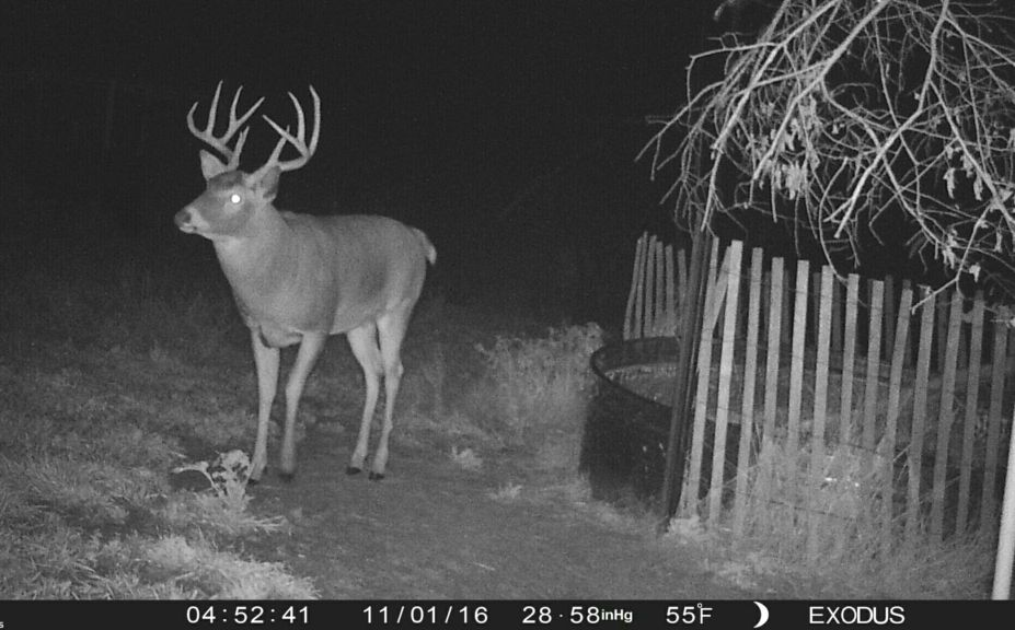 all season deer habitat