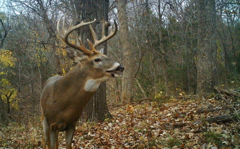 morning thermal deer hunting
