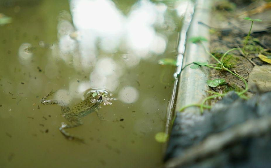whitetail waterhole