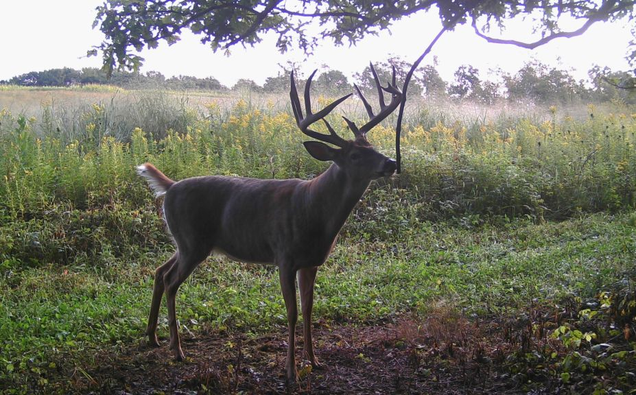 hunt whitetails in wind