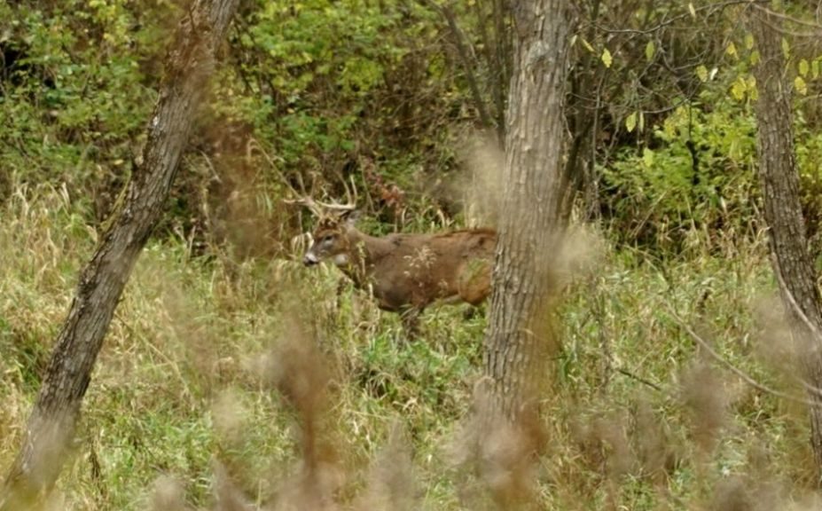 windy weather whitetails