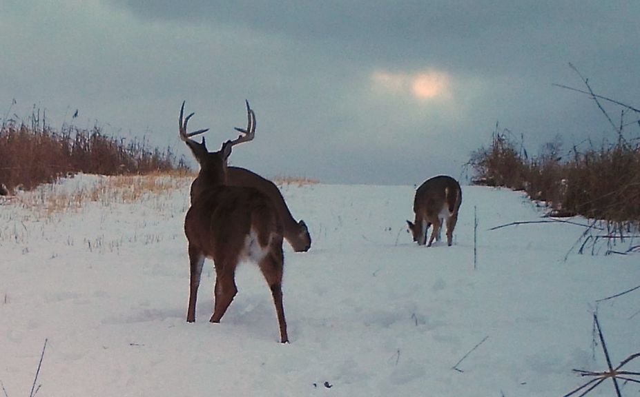 late season morning deer